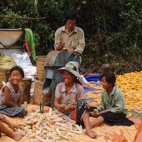 Exploring ways of uplifting pig farmers' livelihoods in northwestVietnam