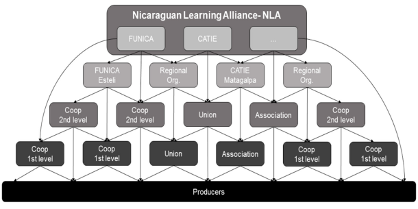 Structure of knowledge replication within the Nicaraguan Learning Alliance