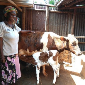 Achieving gender-equitable outcomes in low emissions development initiatives in the Kenyan dairysector