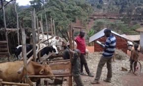 Assessing sustainability of smallholder dairy and traditional cattle milk production systems in Tanzania