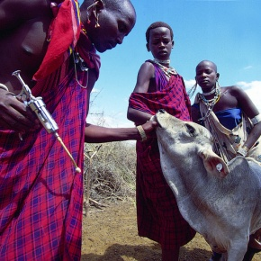 Enhancing awareness of equity issues in the Malawian veterinary medicinesector