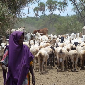 Using the livestock master plan process to boost investment in livestock development