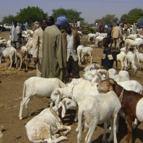 'Livestock master plan' launched to transform meat, milk and poultry production in The Gambia